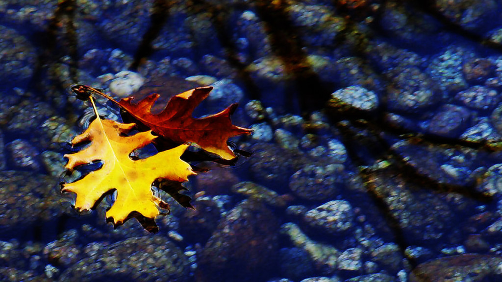 leaves_in_a_stream